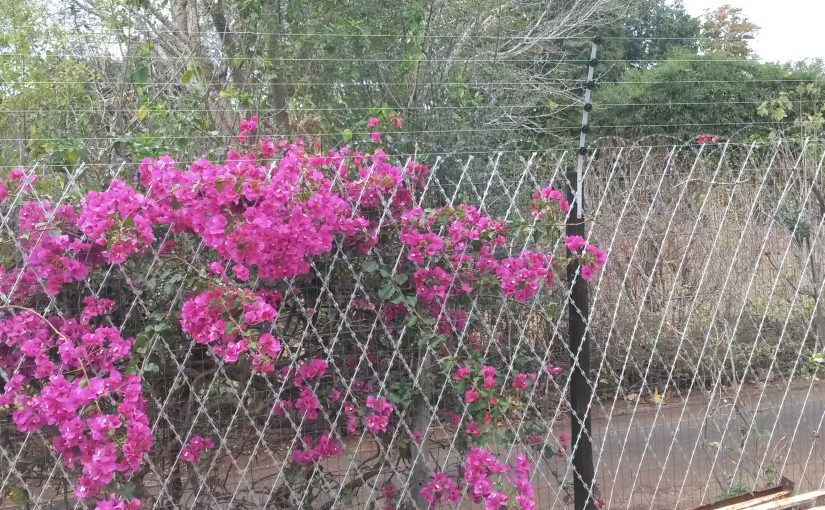 Fencing by SKM